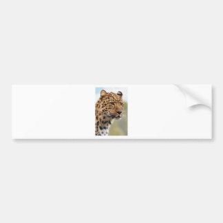 Cheetah Animal Bumper Sticker