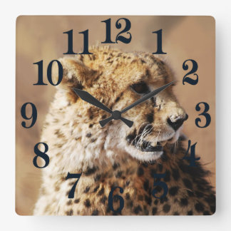 Cheetah beauty with fangs square wall clock