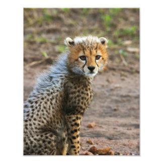 Cheetah Cub Acinonyx Jubatus) as seen in the Photo Art