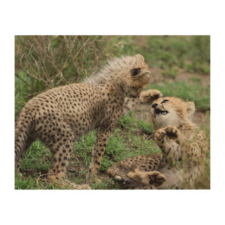 Cheetah Cubs Playing Wood Print