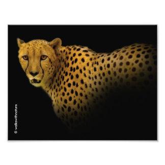 Cheetah Emerging from the Black Art Photo