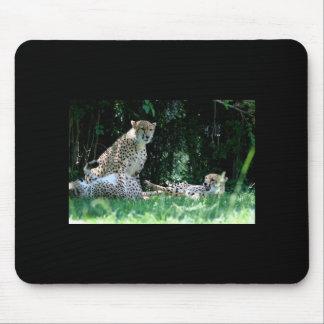 Cheetah Family Mousepad