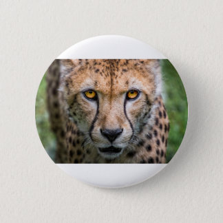Cheetah Head 2 Inch Round Button