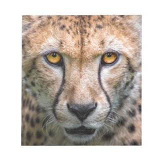 Cheetah Head Notepad