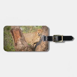 Cheetah in Tree Luggage Tag