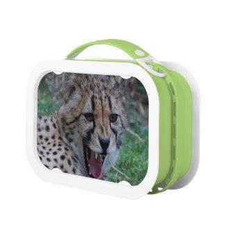 Cheetah Lunch Box