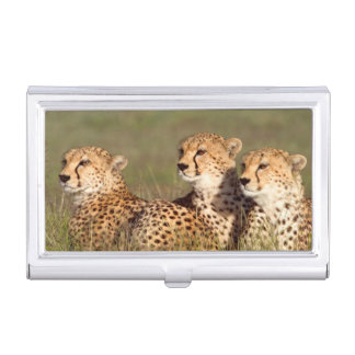 Cheetah Lying In Grass, Ngorongoro Conservation Business Card Holders