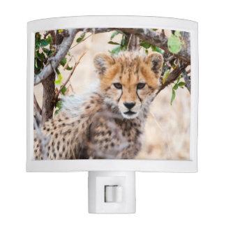 Cheetah, Maasai Mara National Reserve Nite Lite