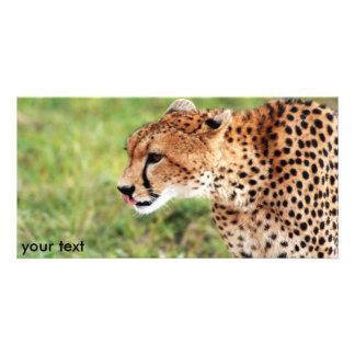 Cheetah Photo Card