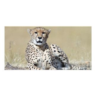 Cheetah Photo Cards