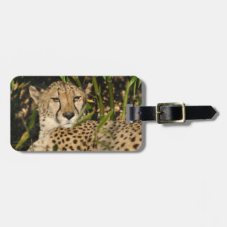 Cheetah photograph luggage tag
