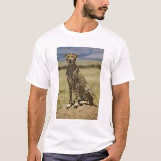Cheetah resting, Acinonyx jubatus, Masai Mara, T-Shirt