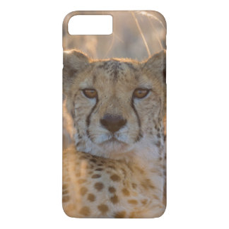 Cheetah Resting male iPhone 7 Plus Case