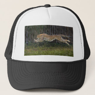 Cheetah Run Ball Cap