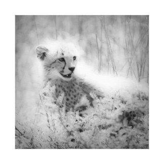 Cheetah s cub Wrapped Canvas Stretched Canvas Prints
