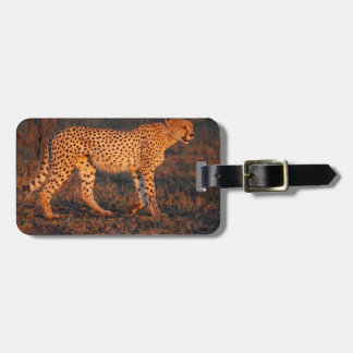 Cheetah South Africa at Sunset Luggage Tag
