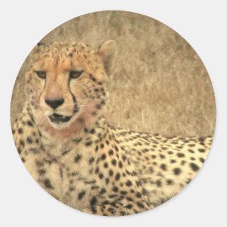 Cheetah Spots Sticker