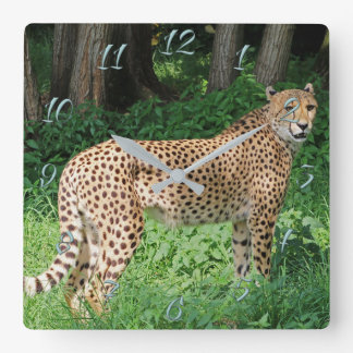 Cheetah Square Wall Clock