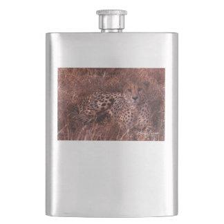 Cheetah Stare Flasks
