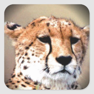 Cheetah Tear Marks Hakunamatata Square Sticker
