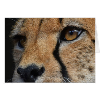 Cheetah Thank You Card