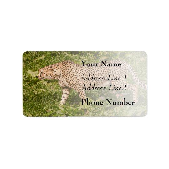 Cheetah Walking In A Field, Animal Photography