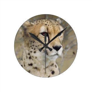Cheetah Wall Clock