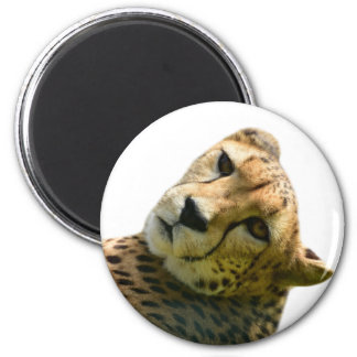 Cheetah wild jungle zoo animal photo magnet