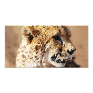 Cheetahs beauty in Africa Photo Card Template