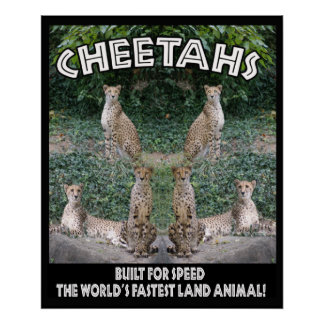 CHEETAHS - BUILT FOR SPEED POSTER