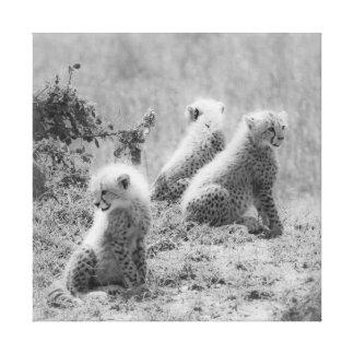 Cheetah's cubs canvas print