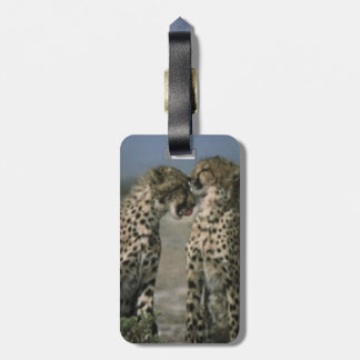 Cheetahs in Love Luggage Tag