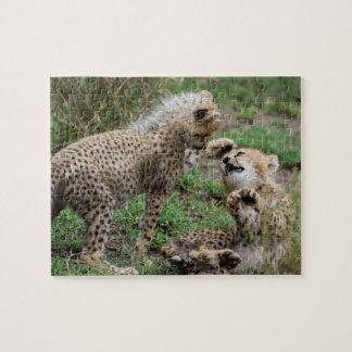 Cheetahs Playing Puzzle
