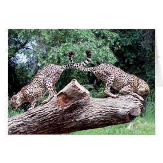 Cheetahs Tails Crossed Card