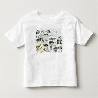 Cheiroptera, Insectivora Toddler T-shirt
