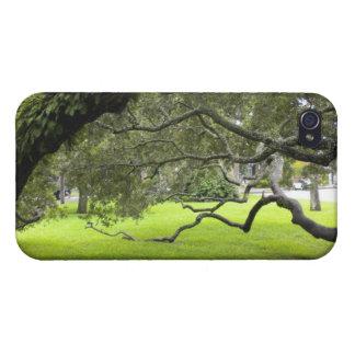 Chêne sur l'île de St Simons Étui iPhone 4