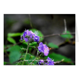 Cherokee National Forest flowers Card