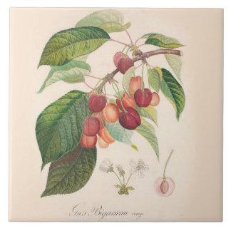 Cherries 6 X 6 inch Ceramic Tile Kitchen Decor