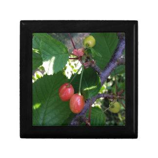 Cherries turning red gift box
