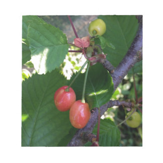 Cherries turning red notepad