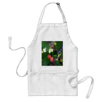 Cherries turning red standard apron