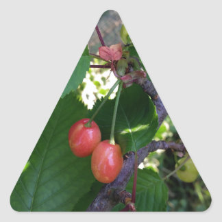 Cherries turning red triangle sticker