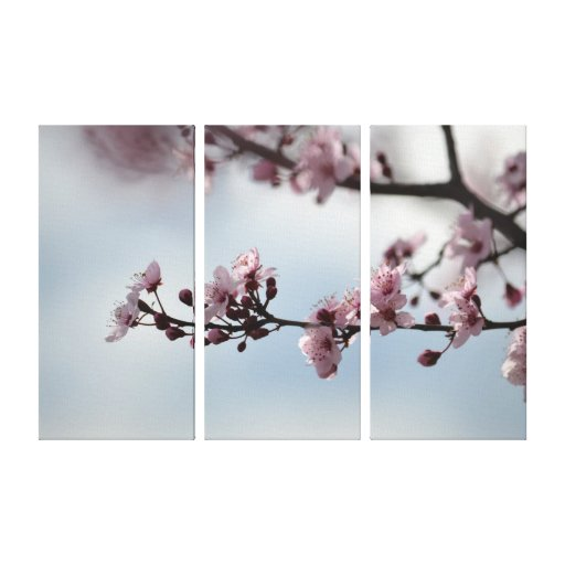 Cherry Blossom and Sky Gallery Wrapped Canvas