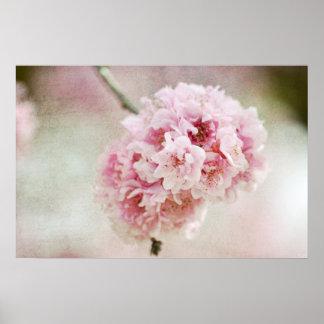 Cherry Blossom Botanical Poster