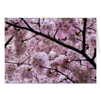 Cherry Blossom Canopy Card