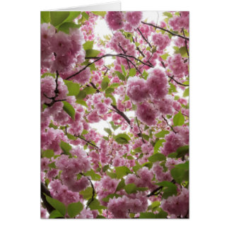 Cherry Blossom Canopy II Card