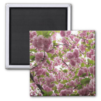 Cherry Blossom Canopy II Magnet