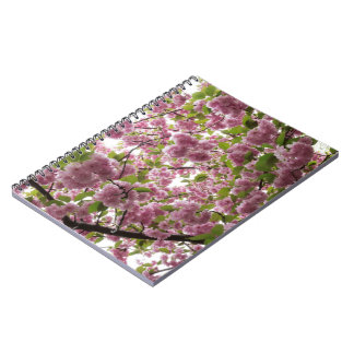Cherry Blossom Canopy II Notebook