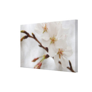 Cherry Blossom Canvas Art Stretched Canvas Print
