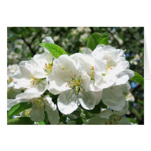 Cherry blossom - Card